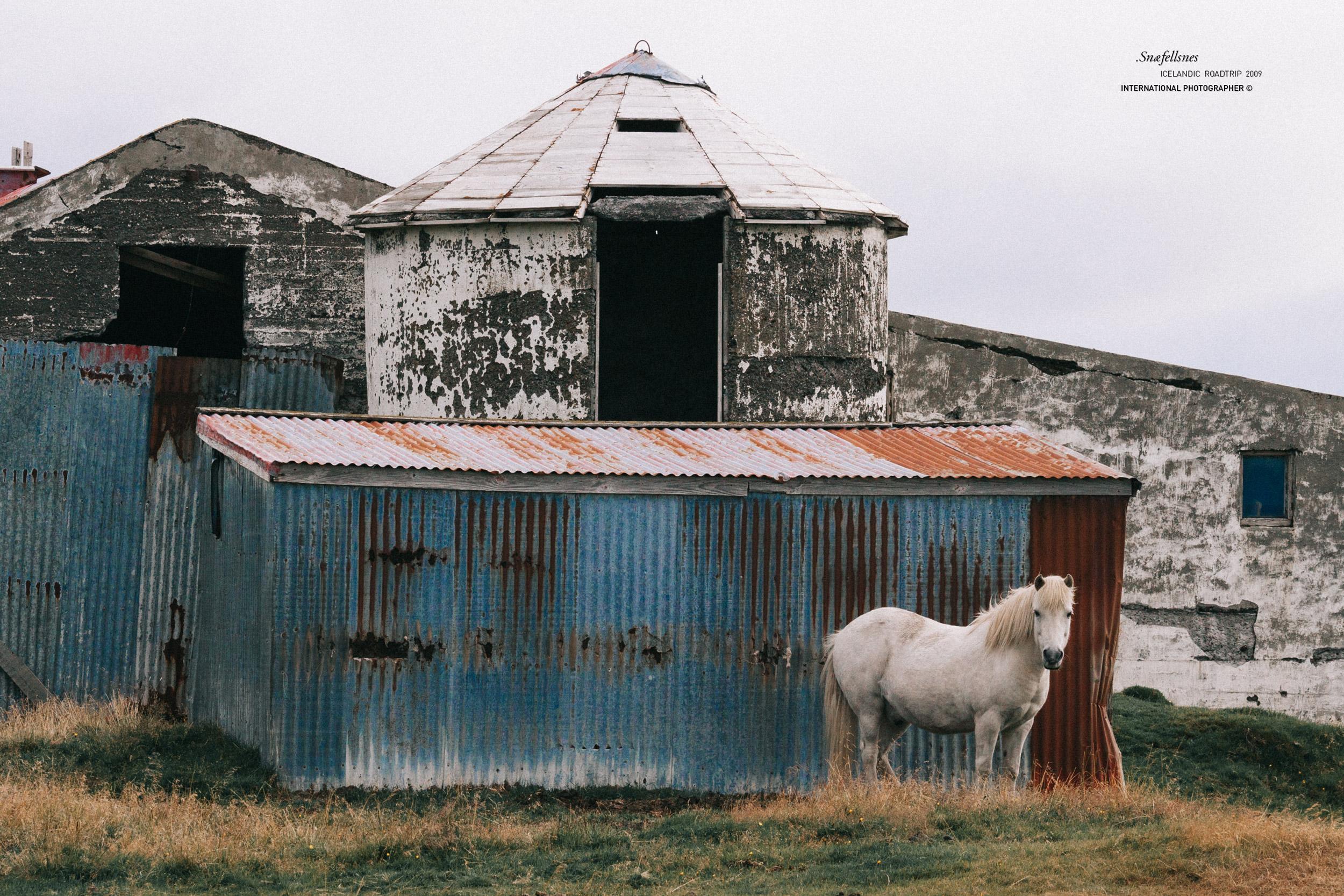 Cheval devant une ferme en ruine dans la péninsule de Snaefellsnes