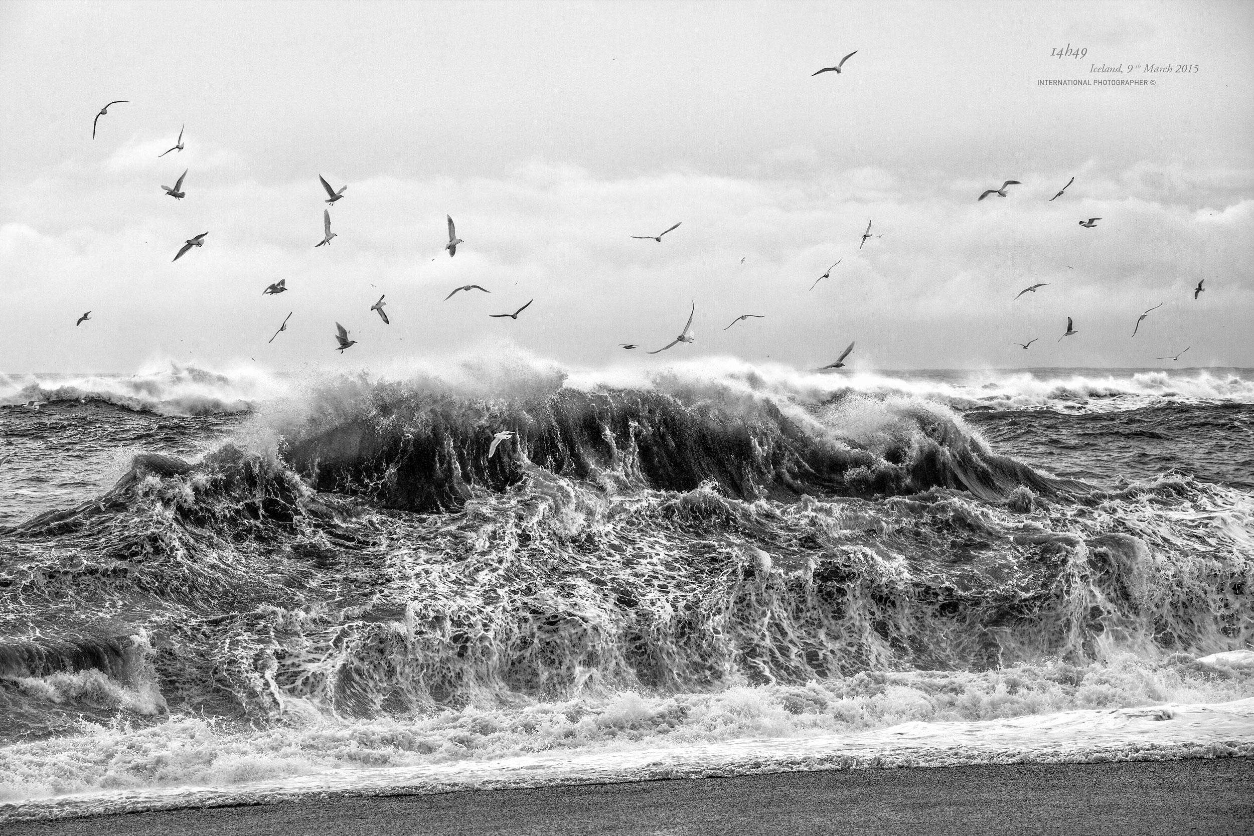 Les vagues de Reynisfjara et ses oiseaux